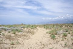 Sandy vegetation Royalty Free Stock Image