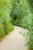 Sandy Vegetation Path Royalty Free Stock Photography