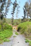 Sandy Walking Trail - trayectoria batida - a través de campos en un pueblo indio imágenes de archivo libres de regalías
