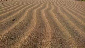 Sandy. Wave in Gran Canaria dunes royalty free stock image
