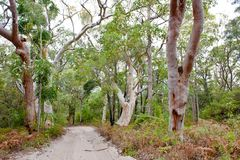 Jungle forest Fraser Island, Australia stock photo