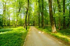 Sandy-Weg entlang grünem Frühlingspark im ländlichen Gebiet stockfotografie