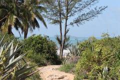 Sandy-Weg zum tropischen Strand Lizenzfreies Stockfoto