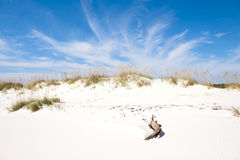 Sandy White Beach and Beautiful Blue Sky. White sandy beach with sea oats and a beautiful blue sky and white clouds Stock Photo