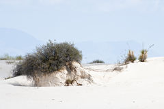 Sandy white desert Stock Photo