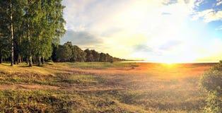 Sandy wybrzeże zatoka Finlandia z niską krawędzią drewno na zmierzchu i trawą Zdjęcia Royalty Free