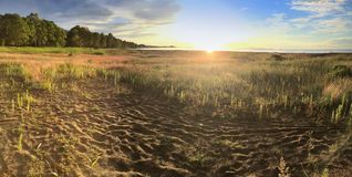 Sandy wybrzeże zatoka Finlandia z niską krawędzią drewno na zmierzchu i trawą Obraz Stock