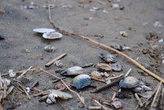 Sandy wybrzeże zatoka Finlandia Zdjęcie Stock