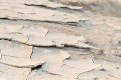 Sandy ziemia Obraz Stock