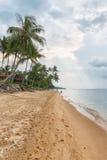 Sandyr strand på aftonen med kokosnötpalmträdlinjen Fotografering för Bildbyråer