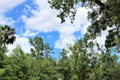 Sanford Fl Big Tree Park Foto de Stock Royalty Free