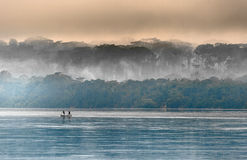 Sangha River. Morning fog on the African river Sangha. Congo Royalty Free Stock Photo
