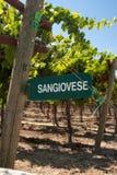 Sangiovese kierunkowskaz Kalifornia Fotografia Royalty Free