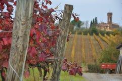 Виноградники для sangiovese San Miniato Тосканы Италии Стоковая Фотография RF