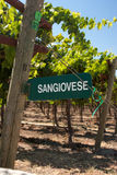 Sangiovese Signpost of California Royalty Free Stock Photography