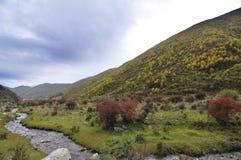 Sangke grasslands Royalty Free Stock Photos