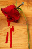 Sangramento Rosa Imagens de Stock Royalty Free