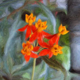 Sangre-Flor Foto de archivo libre de regalías