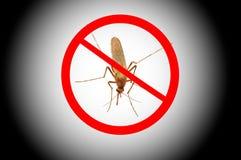 Sangre que aspira del mosquito Foto de archivo libre de regalías
