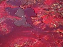 Sangre roja Fotos de archivo