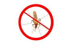 Sangue de sugação do mosquito Fotografia de Stock Royalty Free