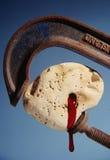 Sangue de uma pedra Fotografia de Stock