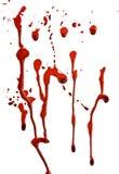 Sangue do gotejamento Foto de Stock