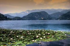 Sanguinato con il lago, isola, Slovenia, Europa Fotografia Stock Libera da Diritti