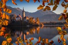 Sanguinato, la Slovenia - la bella alba di autunno nel lago ha sanguinato con la chiesa famosa di pellegrinaggio del presupposto  Fotografia Stock Libera da Diritti