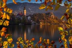 Sanguinato, la Slovenia - la bella alba di autunno nel lago ha sanguinato con la chiesa famosa di pellegrinaggio del presupposto  Immagini Stock