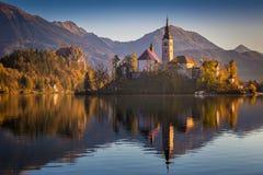 Sanguinato, la Slovenia - la bella alba di autunno nel lago ha sanguinato con la chiesa famosa di pellegrinaggio del presupposto  Immagine Stock