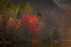 Sanguinato, la Slovenia - i colori di autunno della Slovenia dal lago hanno sanguinato Immagine Stock