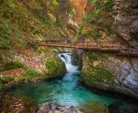 Sanguinato, la Slovenia - il bello canyon della gola di Vintgar con il ponte di legno e la corrente vicino ha sanguinato Fotografie Stock