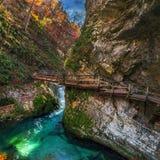 Sanguinato, la Slovenia - il bello canyon della gola di Vintgar con il ponte di legno e la corrente vicino ha sanguinato Immagini Stock