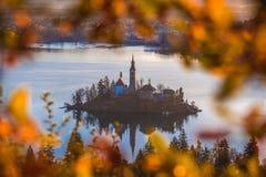 Sanguinato, la Slovenia - la vista aerea dell'alba del lago ha sanguinato preso dal punto di vista di Ostrica all'autunno Fotografie Stock
