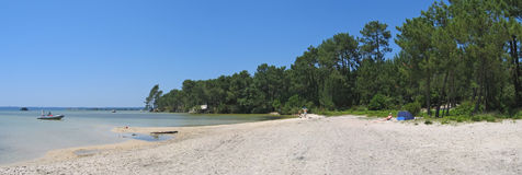 Sanguinet lake with big pines. Along the beach and some boat on the water - The Landes - South west France - Panorama Stock Photos