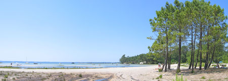 Sanguinet lake with big pines. Along the beach in the Landes - South west France - Panorama Stock Photo