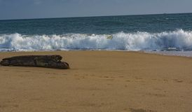 Solitary Log on the beach facing Waves - Sanguthurai stock photo