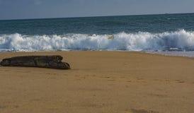 Solitary Log on the beach facing Waves - Sanguthurai. Sanguthurai is a small village in Kanyakumari district, Tamil Nadu, India, near Nagercoil. Sanguthurai stock photo