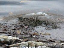 Sanibel-Insel Florida der roten Flut Stockfotos