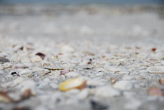 Sanibel Island Royalty Free Stock Photos