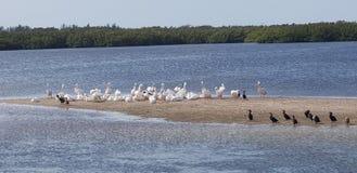 Sanibel Island Florida Sunshine State. Sanibel Island Florida. Sunshine State. JN Ding Darling National Wildlife stock photography