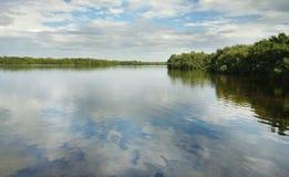 Sanibel Island nature. Mangrove trees and water in the J.N. Darling National Wildlife Refuge on Sanibel Island Florida royalty free stock images