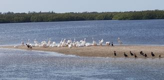 Sanibel wyspa Floryda Sunshine State fotografia stock