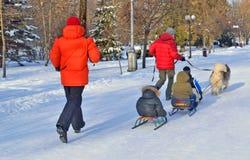 Sanie przejażdżki ciągnęli sanie psami w zimie Fotografia Stock