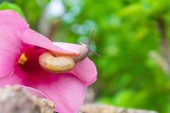 Sanil e fiore rosa Immagine Stock