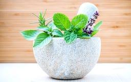 Sanità alternativa e medicina di erbe Erbe fresche con il Mo Fotografia Stock Libera da Diritti
