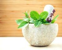Sanità alternativa e medicina di erbe Erbe fresche con il Mo Fotografie Stock Libere da Diritti