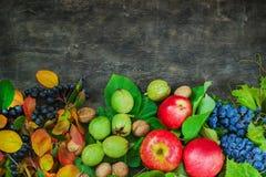 Sanità di legno scura del fondo del paese di frutti dell'assortimento delle bacche della mela dell'uva del damascene della sorba  Fotografie Stock
