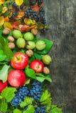 Sanità di legno scura del fondo del paese di frutti dell'assortimento delle bacche della mela dell'uva del damascene della sorba  Immagine Stock